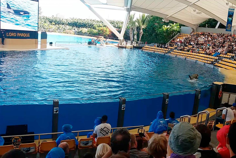 Renovación del sistema de enfriamiento de la piscina de orcas de 22.000 M3 de volumen mediante un sistema de climatización de piscina a 13º C con enfriadoras geotérmicas de baja entalpía